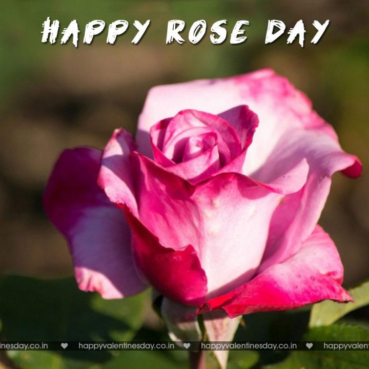 Rose Day – free valentines ecards | Happy Valentines Day Greetings ...