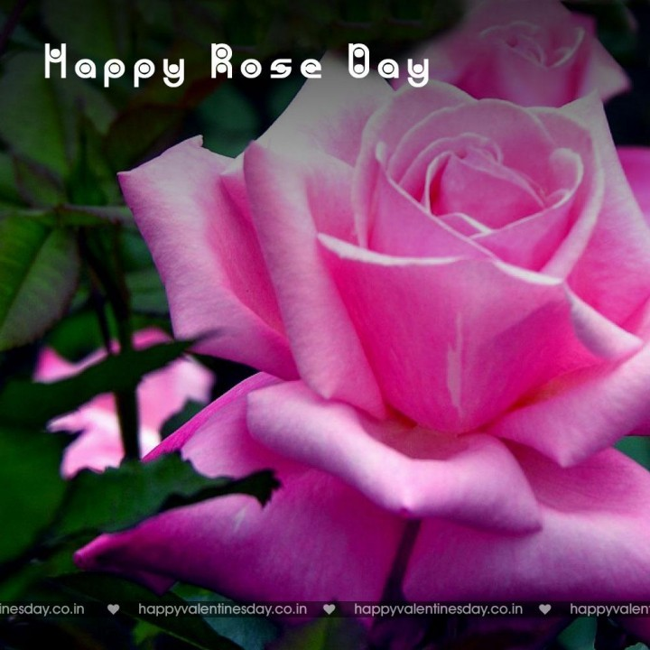 Rose Day – happy valentines day in swedish | Happy Valentines Day ...