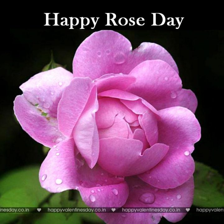 Rose Day – happy valentines day song | Happy Valentines Day ...