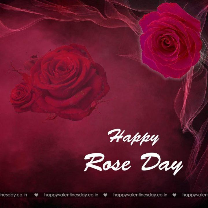 Rose Day Happy Valentine Day Images Download Happy Valentines